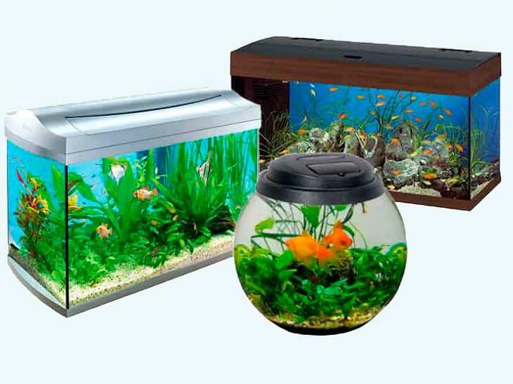 1455734295_akvarium-1