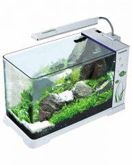 Выбор аквариума.